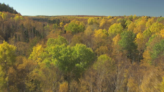 ms aerial shot of over fall trees in cook county and low over lake / minnesota, united states - minnesota stock videos & royalty-free footage