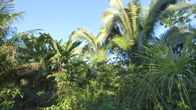 vídeos de stock e filmes b-roll de ms pan shot of palm trees and banana trees with huts / checherta village, peru - telhado de palha