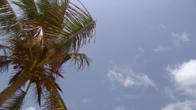 ms shot of palm trees and moving clouds / colombo, western province, sri lanka - palm tree stock videos & royalty-free footage