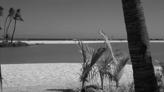 MS Shot of palm trees at beach near waikikian hotel at honolulu hawaii