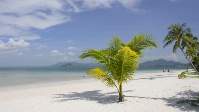 WS Shot of Palm trees at sandy beach, hat chao mai marine national park / Ko Mook, Trang, Thailand