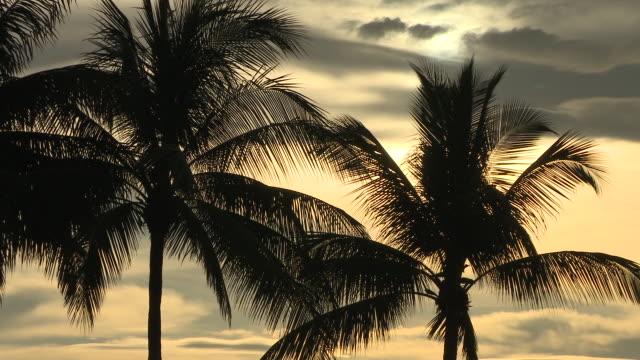 MS Shot of Palm trees at sunset / Kota Kinabalu, Sabah, Malaysia