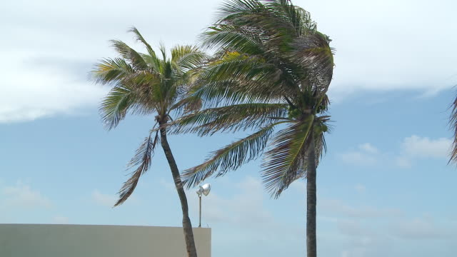 ms td shot of  palm trees in the wind to pool with  cancun shoreline   / cancun, quintana roo, mexico - quintana roo stock videos and b-roll footage