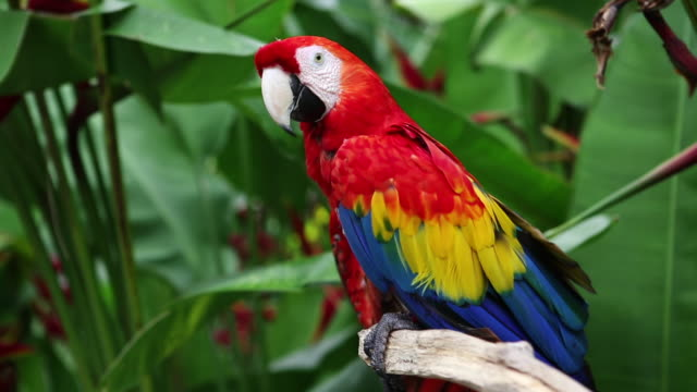 cu shot of parrot / ubud, bali, indonesia - parrot stock videos & royalty-free footage