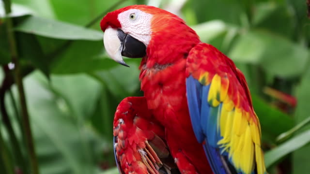 cu td shot of parrot / ubud, bali, indonesia - parrot stock videos & royalty-free footage