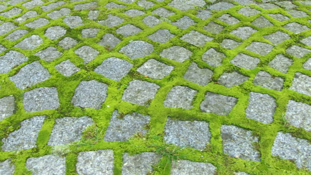 cu pov shot of paving stones with moss / saarburg, rhineland, palatinate germany - saarburg stock-videos und b-roll-filmmaterial