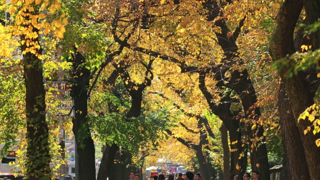 MS TU Shot of pedestrians and autumnal fallen leaves at 5th Avenue sidewalk under the autumn color trees / New York, United States