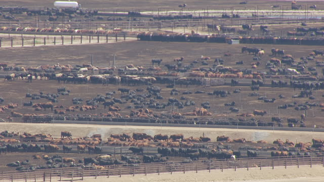 ms aerial shot of pens of brown and black cattle in feedlot / willow island, nebraska, united states - rind stock-videos und b-roll-filmmaterial