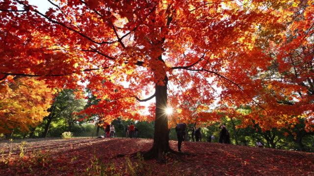 WS T/L TU Shot of people and autumnal fallen leaves under the waving autumnal color trees by winds at setting sun / New York, United States