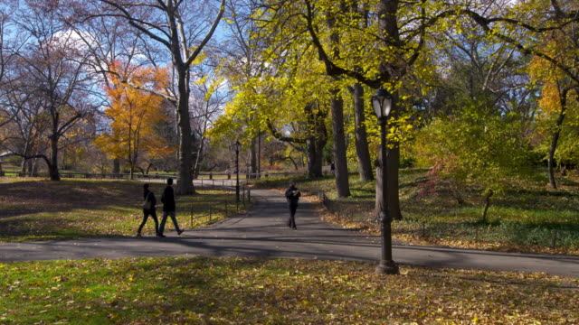 vidéos et rushes de shot of people walking along  paths in central park, new york city on a fall day.  the trees are in full fall colors and a strong wind is causing the leaves to fall - central park