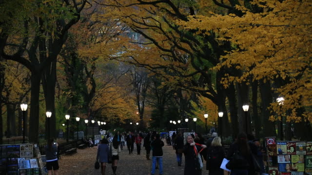 ws pan tu shot of people walking down mall surrounded by autumn color trees and autumnal leaves at dusk / new york, united states - people standing in a row stock videos & royalty-free footage