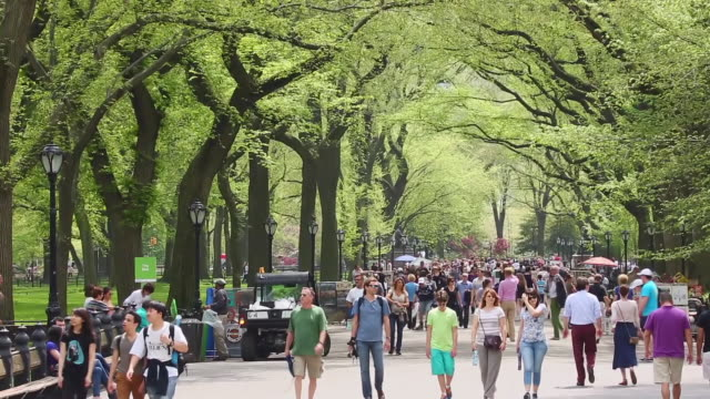ms pan shot of people walking down mall which surrounding by row of fresh green trees at central park / new york, united states  - gemeinsam gehen stock-videos und b-roll-filmmaterial