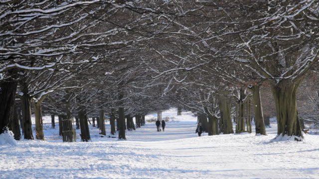 WS Shot of people walking on snow cover road under trees / London, United Kingdom