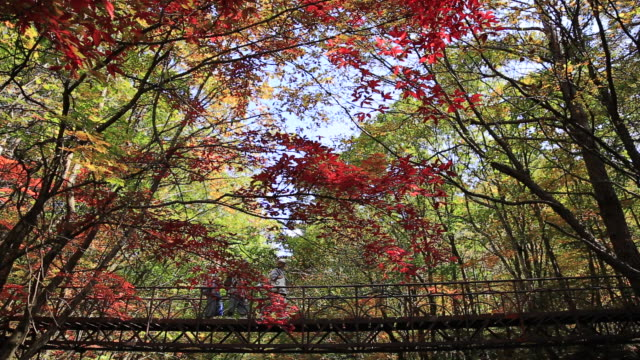 Shot of people walking on the bridge and maple trees at Suryeomdong Valley in Mt.Seoraksan