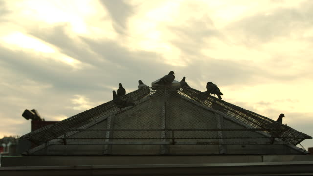 Shot of pigeons being disturbed on a Manhattan rooftop.