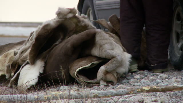 stockvideo's en b-roll-footage met ms shot of pile of animal skins on ground/ arviat, nunavut, canada - wiese