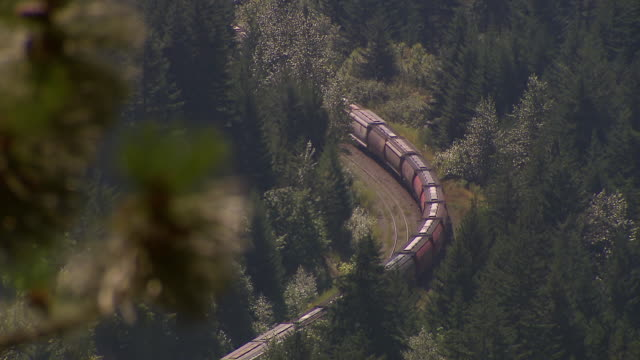 CU R/F Shot of Pine needles to freight train winding around bend near Alaska Highway / Yukon, Canada
