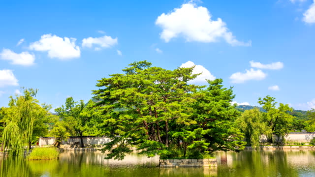 shot of pine tree near gyeonghoeru pavilion at gyeongbokgung ancient palace - pavilion video stock e b–roll
