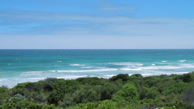 ws pan shot of plants clinging to dunes overlooking southern ocean / aireys inlet, victoria, australia - antarctic ocean stock videos & royalty-free footage