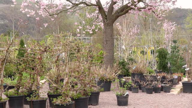 ms pan shot of plants in nursery / saarburg, rhineland-palatinate, germany - plant nursery stock videos and b-roll footage