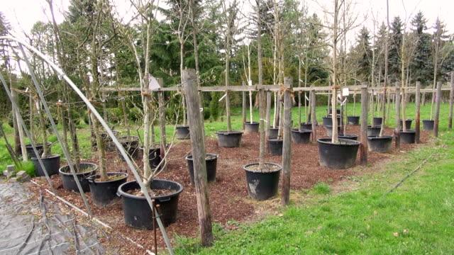 ms shot of plants in nursery / saarburg, rhineland-palatinate, germany - plant nursery stock videos and b-roll footage