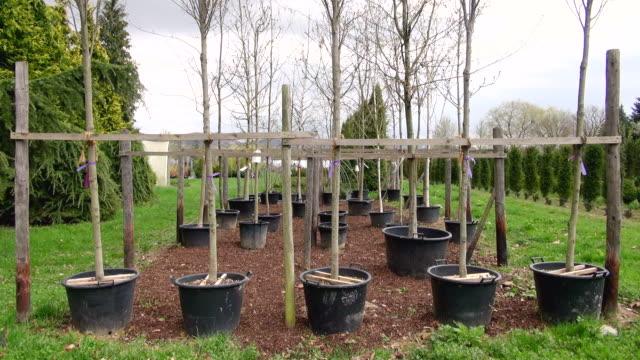 ms shot of plants in nursery / saarburg, rhineland-palatinate, germany - saarburg stock-videos und b-roll-filmmaterial