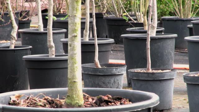 cu shot of plants in nursery / saarburg, rhineland-palatinate, germany - saarburg stock-videos und b-roll-filmmaterial