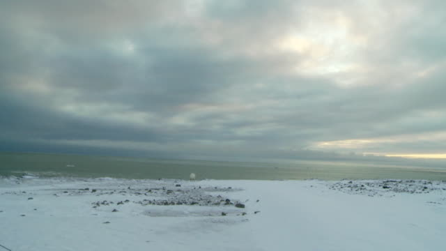ws shot of polar bear on edge of frozen shore with grey blue sky / arviat, nunavut, canada - wiese stock videos & royalty-free footage