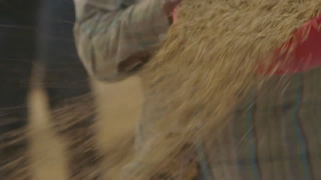 CU TS SLO MO Shot of pouring grain from bucket / New Delhi, India