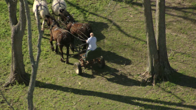 ms aerial zo shot of prisoner standing on platform driving horse buggy / angola, louisiana, united states - prisoner stock videos and b-roll footage