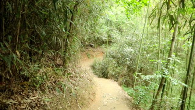 vídeos y material grabado en eventos de stock de shot of promenade in bamboo grove - arboleda