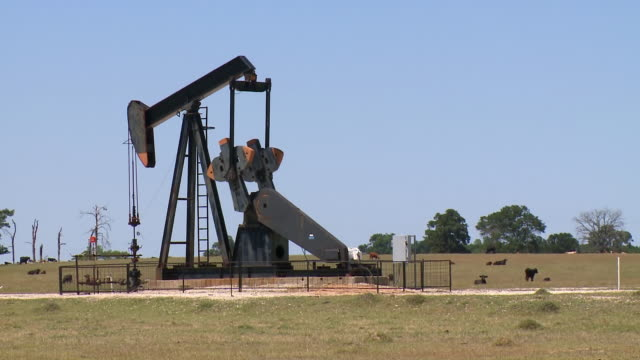 ms shot of pump jack in field with cows / texas, united states - oljepump bildbanksvideor och videomaterial från bakom kulisserna