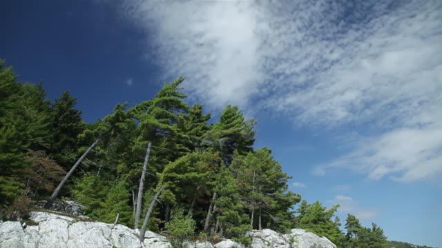ms pov shot of quartzite cliff and pines / killarney, ontario, canada - quarz stock-videos und b-roll-filmmaterial