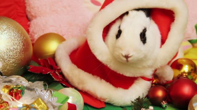 vídeos de stock e filmes b-roll de cu shot of rabbit dressed up like santa claus / seoul, south korea - chapéu do pai natal