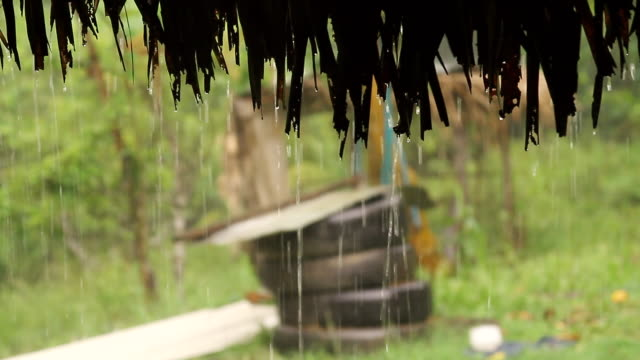 vídeos de stock e filmes b-roll de ms shot of rain flowing on roof and palm covered hut / aguacate, toledo, belize - wiese