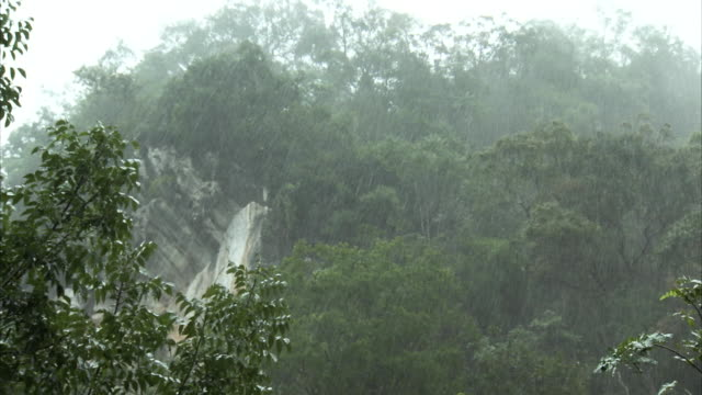 Shot of rain pouring down onto a rainforest in Thailand.