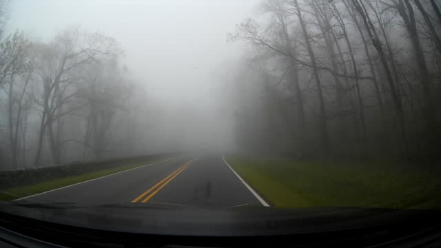 pov shot of rainy day driving between treens - fog stock videos & royalty-free footage