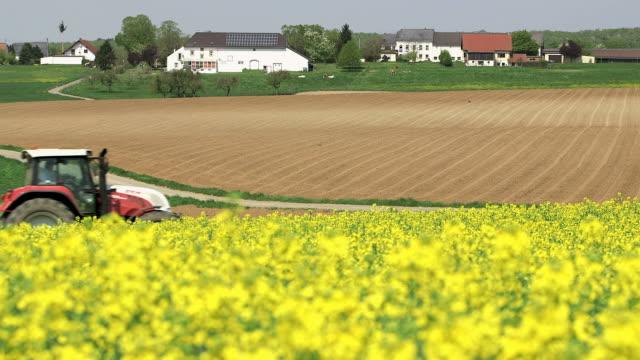 WS Shot of rapefield in front of village / Merzkirchen, Rhineland-Palatinate, Germany