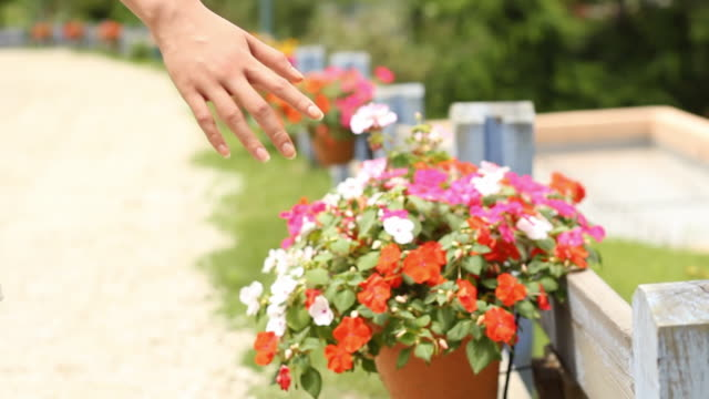 shot of rear view of a young woman strolling and touching flowers in the park - plant pot stock videos & royalty-free footage