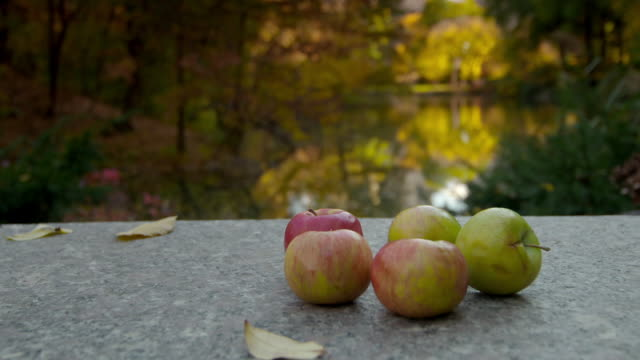 vídeos de stock, filmes e b-roll de shot of red and green apples on a ledge with the lake in central park in the background.  the foliage of the tree is in full fall colors - grupo pequeno de objetos
