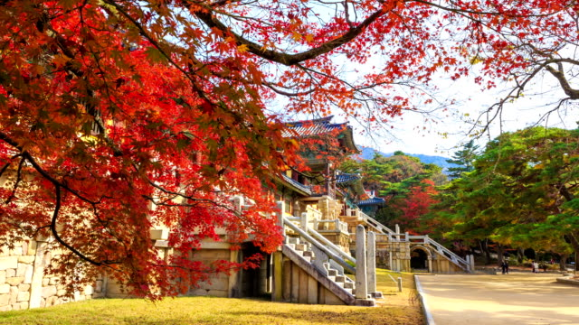Shot of red maple and old architecture at Bulguksa temple