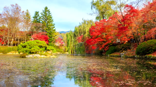 Shot of red maple and pond at Bulguksa temple