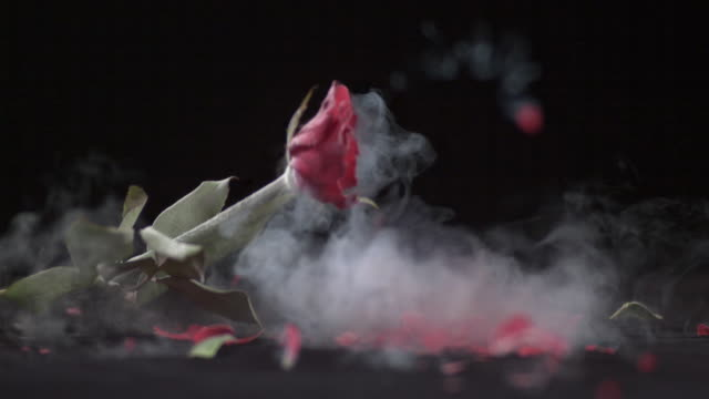 Shot of Red Rose Smashed with Hammer in Extremly Low Temperature