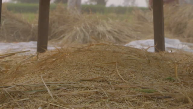ms slo mo shot of rice collecting under thrashing rack / new delhi, india - reis getreide stock-videos und b-roll-filmmaterial