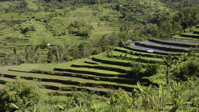 MS PAN Shot of rice terraces / Sidemen, Bali, Indonesia