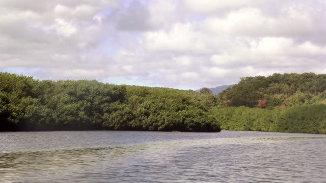 ms pov shot of river and tree covered mountains / kauai, hawaii, united states - wiese stock videos & royalty-free footage