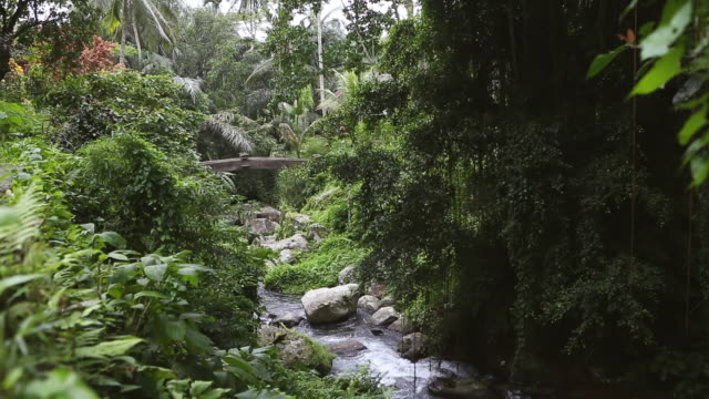 ms shot of river flowing through forest / ubud, bali, indonesia - ubud district stock videos & royalty-free footage