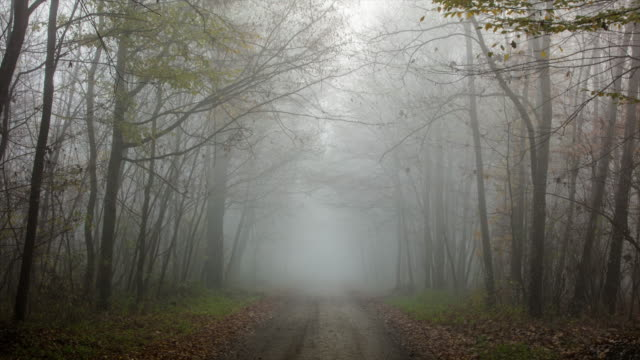 T/L 8K shot of road through a foggy forest