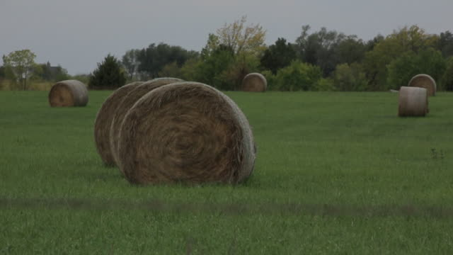 ms shot of round hay bales in field / new york, kansas, united states - hay bail stock videos & royalty-free footage