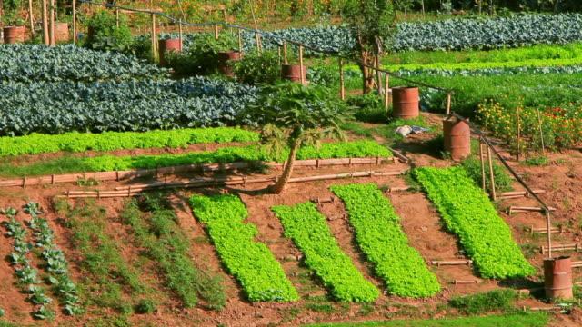ms shot of rows of green cultivated plots / luang prabang, laos - ドラム容器点の映像素材/bロール